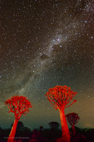 Quiver trees under the Milky Way